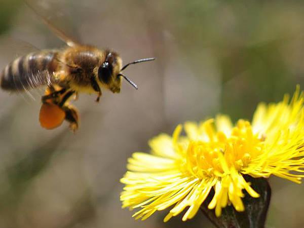 Naturschützer wollen Insekten in Herzebrock-Clarholz schützen - Radio Gütersloh