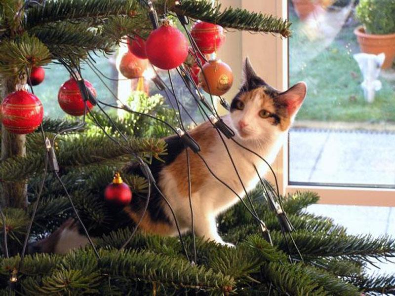 Nordmanntanne Weihnachtsbaum.Nordmanntanne Beliebtester Weihnachtsbaum Radio Gütersloh